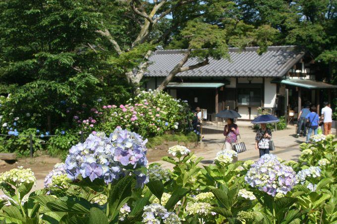 花の寺と愛される「あじさい寺」本土寺