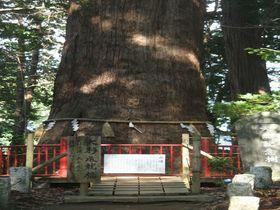 樹齢1400年!大杉の迫力に圧倒!千葉・成田「麻賀多神社」