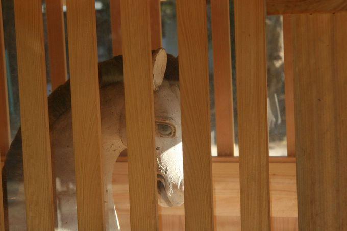 駿馬の愛くるしい瞳は、あなたに何かを語りかけてくる