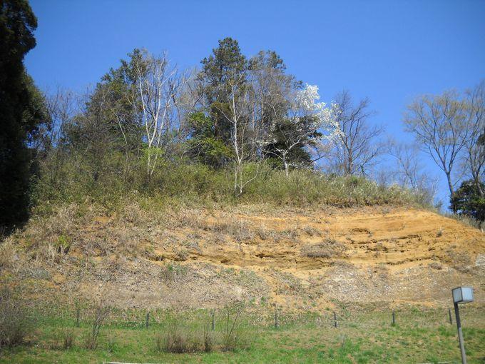 国指定天然記念物「木下貝層」を見上げる