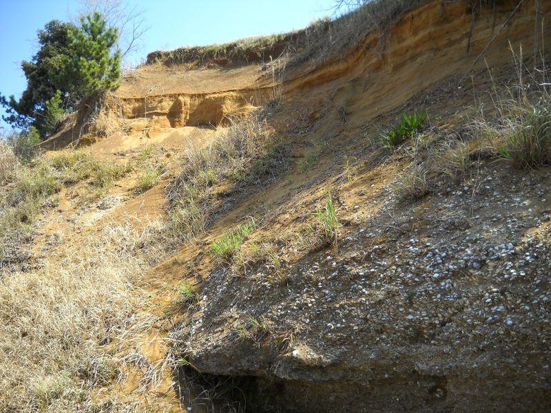 13万年前は海底!千葉印西「木下貝層」で万葉集を紐解く?