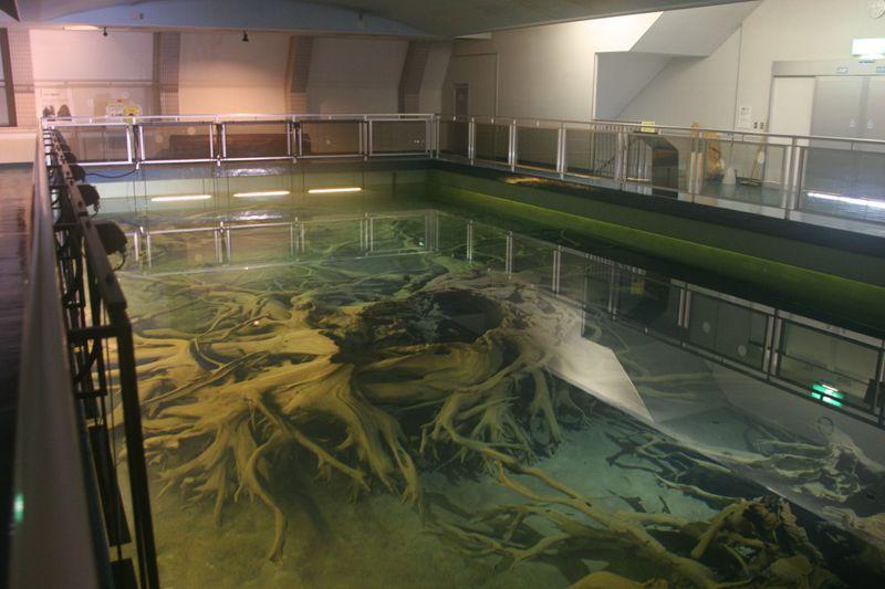 富山湾の二大不思議を解き明かす!「魚津埋没林博物館」