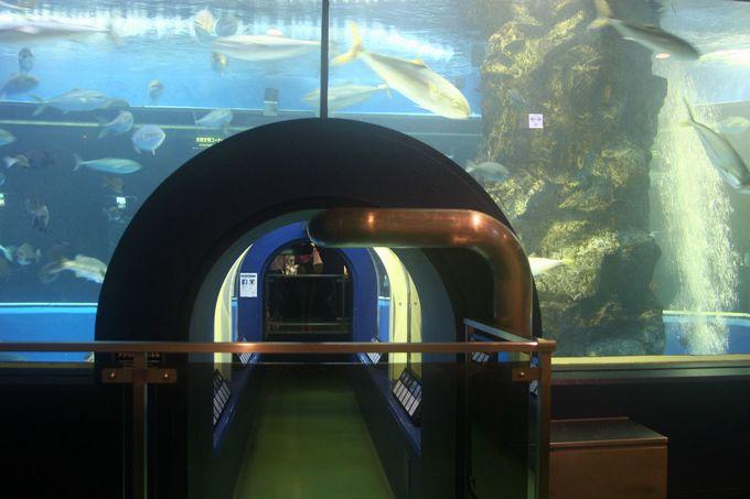 富山湾大水槽!日本初の全面アクリル製の水中トンネル