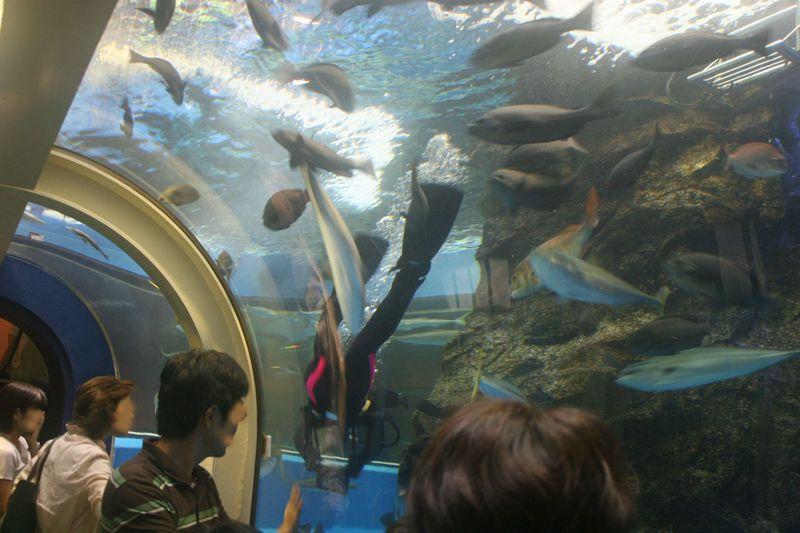 水中トンネルで富山湾を探訪しよう!富山「魚津水族館」