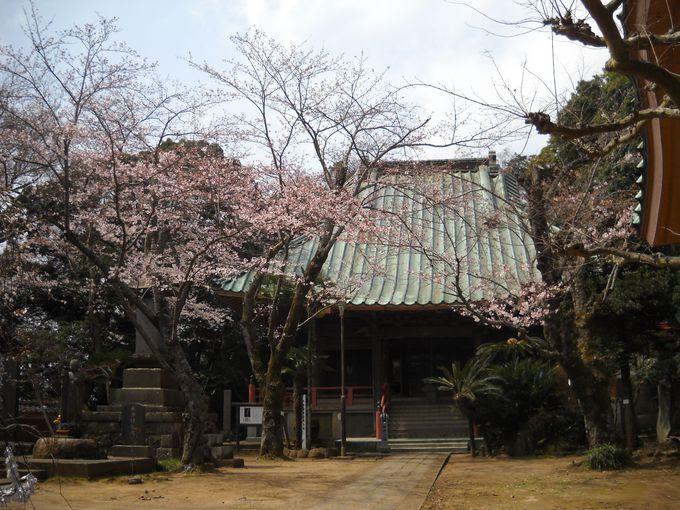 人と人よりそう川沿いの海珠山多聞院「徳満寺」の本堂(地蔵堂)
