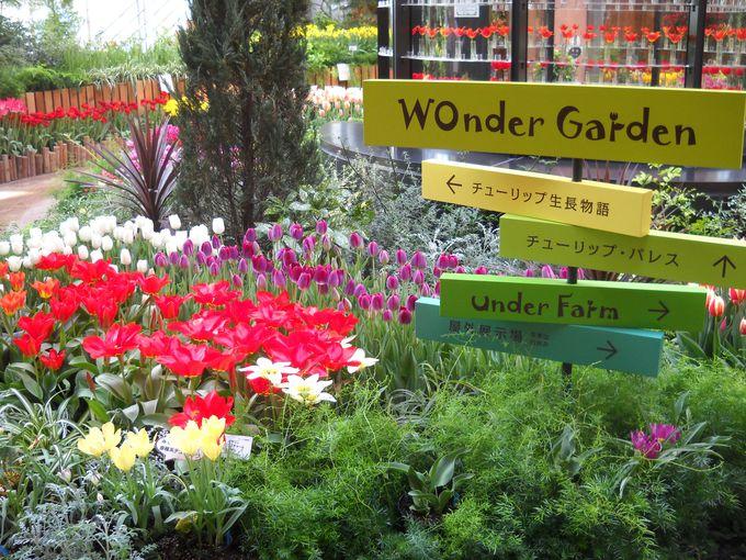 GWはとなみチューリップフェアへ「富山・砺波チューリップ公園」