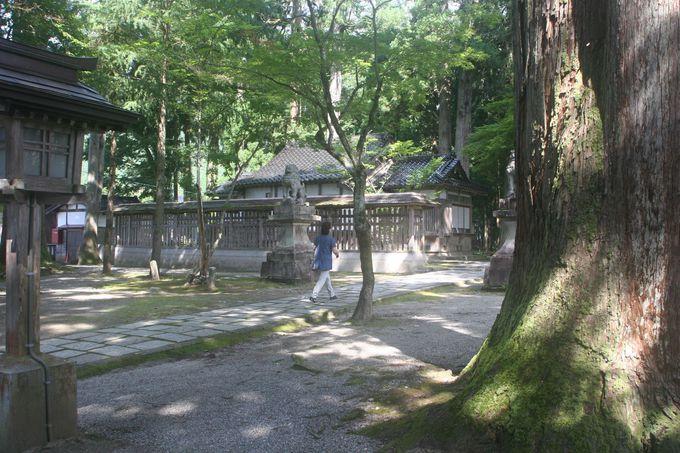 清々しい参道は、樹齢500年あまりの杉木立に見守られている