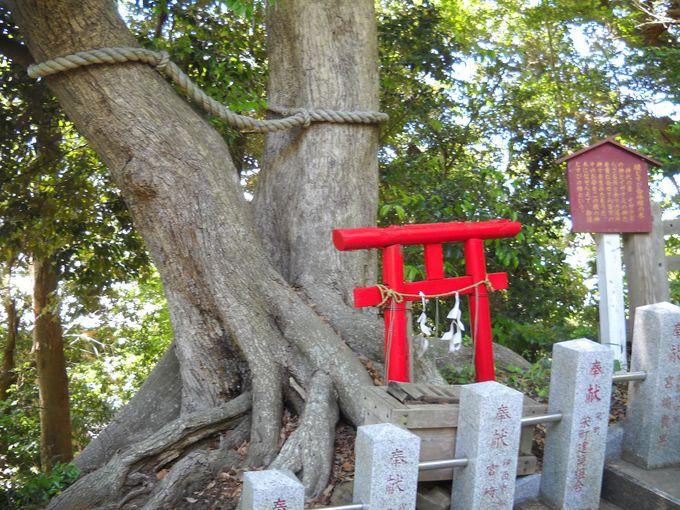 縁結びの「合体椎の木」