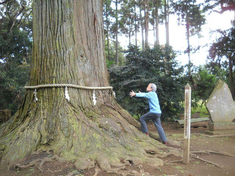 樹齢800年大杉パワースポット!千葉・匝瑳市「松山神社」