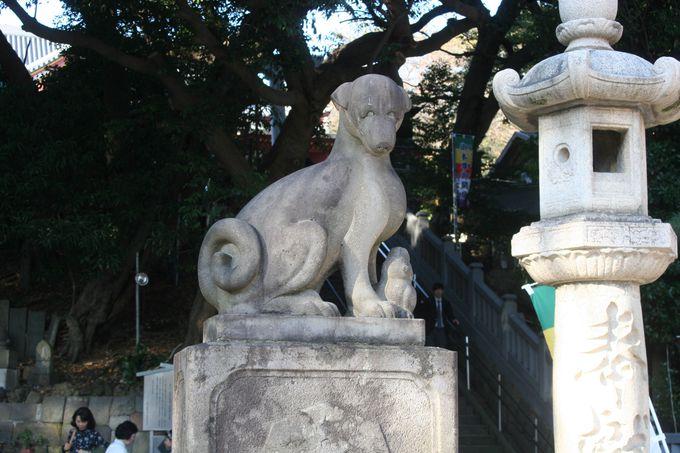 """階段前の""""和犬型狛犬"""""""