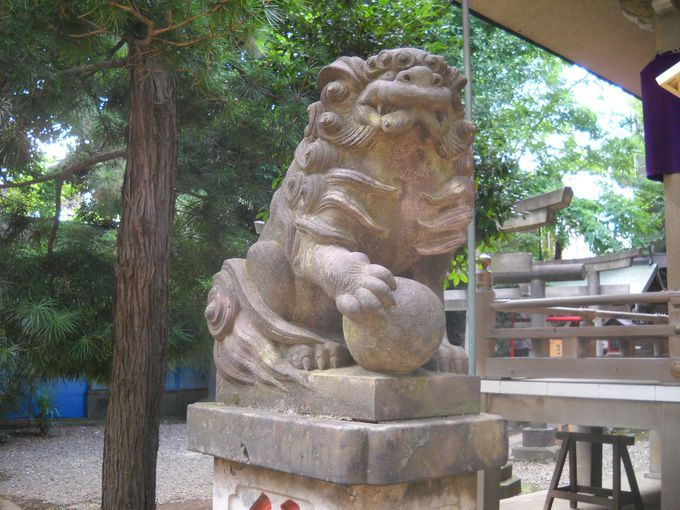 「上目黒氷川神社」拝殿前を護る若き狛犬たち