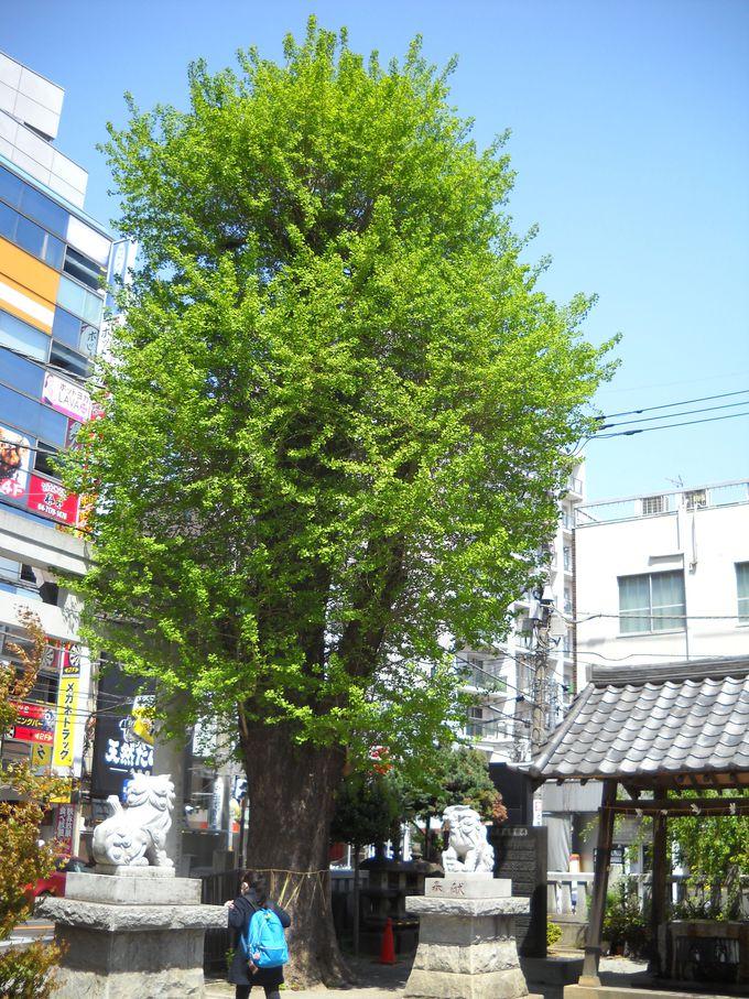 「東京駅」から50分足らずで訪れることができる「柏神社」