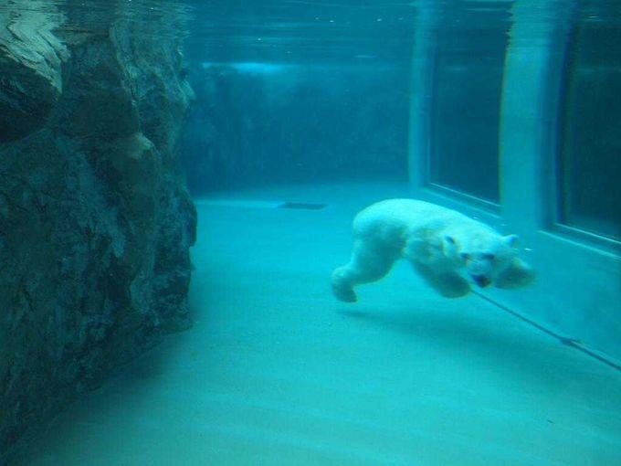 3日目:大人気の「旭山動物園」へ