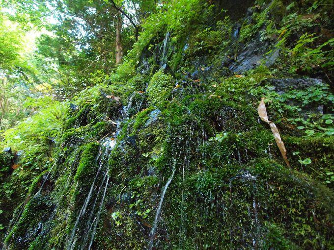 森のパワーを感じる「延命水」