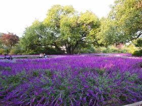 秋を彩る花園を訪ねて 花の芸術村「あしかがフラワーパーク」