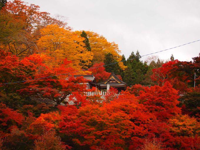 美しい日本の秋を感じる紅葉名所!茨城県大子町「もみじ寺」