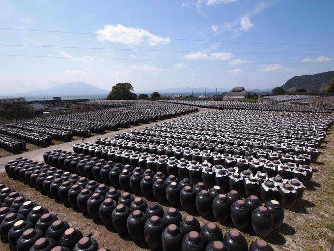 黒酢の里と桜島