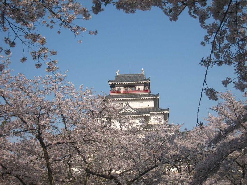 「日本100名城」「日本さくらの名所100選」 桜舞う会津の名城「鶴ヶ城」へ