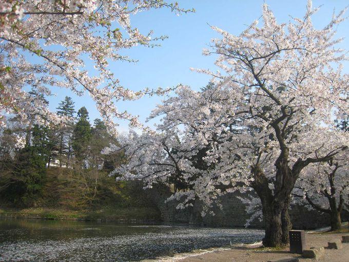 桜舞う城内の散策は、とっても贅沢