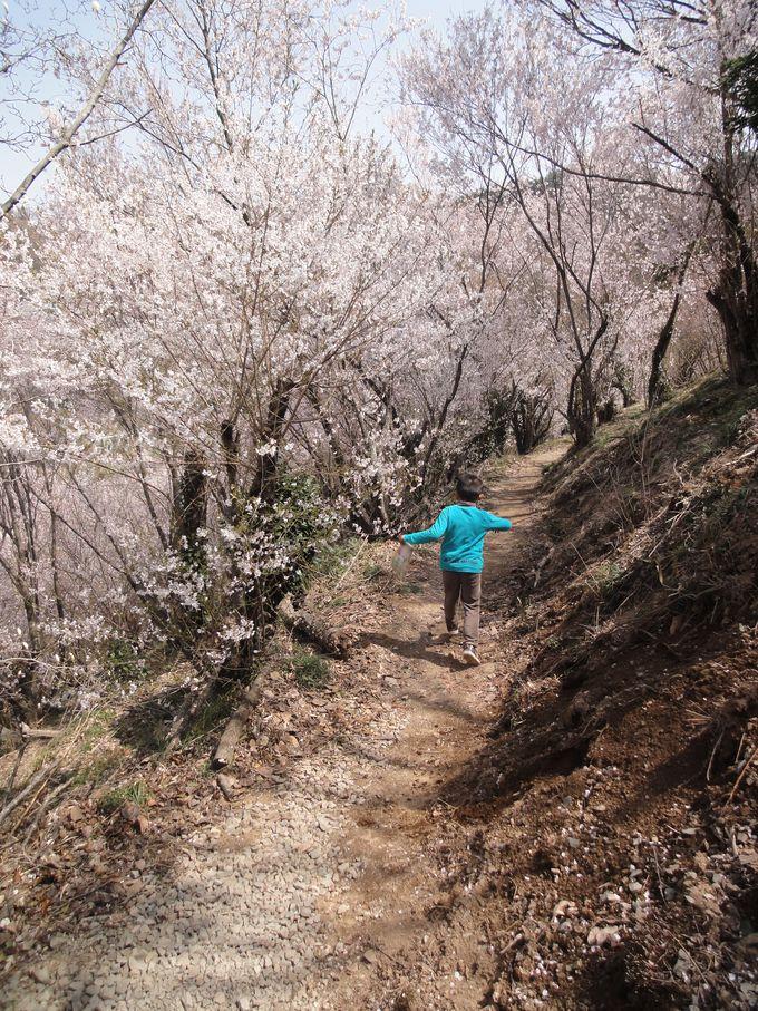 お花のトンネルを通って花見山ウォークしよっ♪