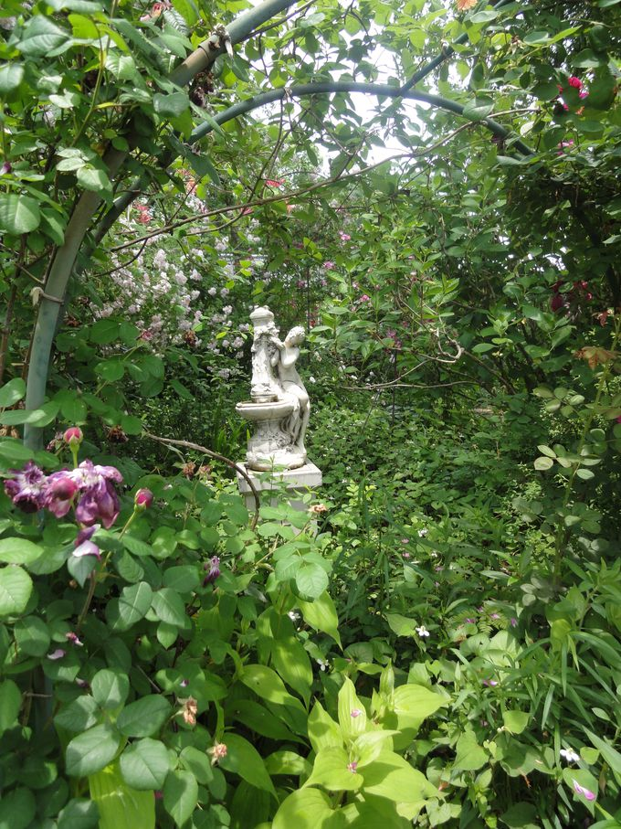 オーナーの愛情があふれるお庭