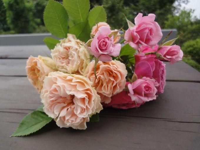 バラの品種名いくつ言えますか?