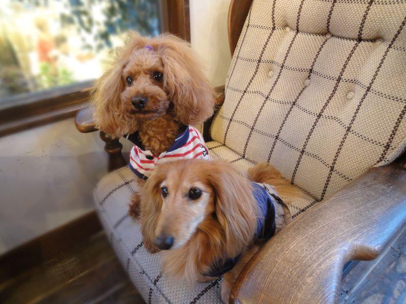 愛犬と一緒に旅しよう!! ワンちゃん天国・那須高原の犬連れOKのお食事処と宿
