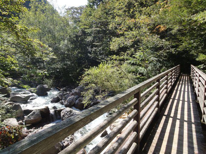 美しい渓流と木々に囲まれた遊歩道