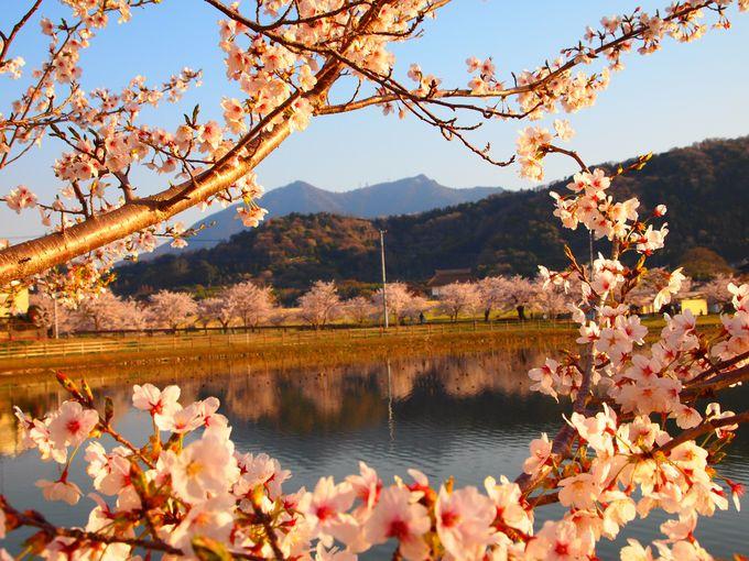 桜のトンネルが凄い!筑波山を臨む桜の名所「茨城・北条大池」
