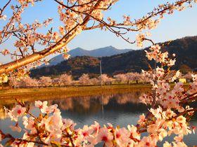茨城のおすすめ桜スポット6選 意外な桜の名所を楽しもう!