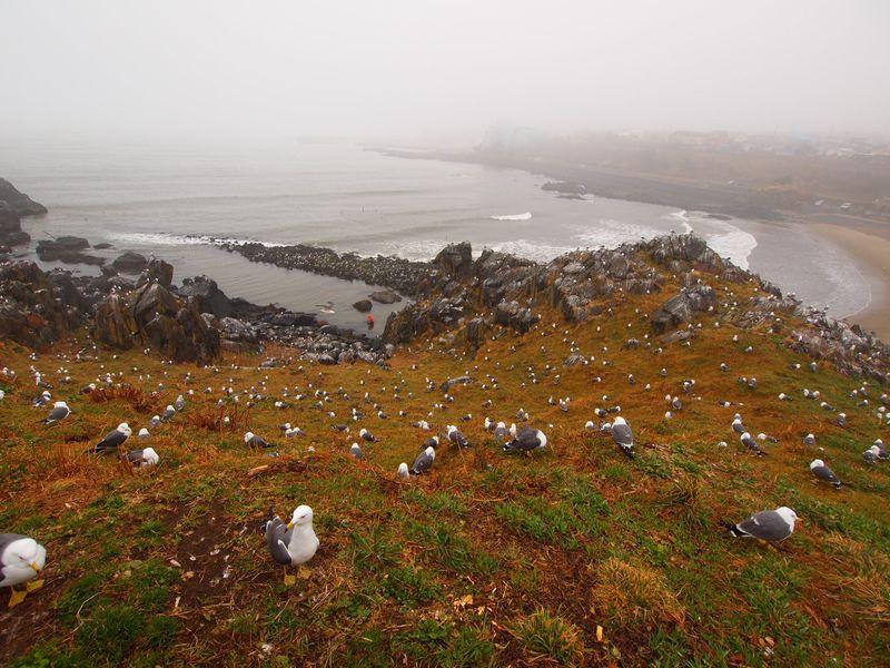 蕪島は、絶景のウミネコ楽園