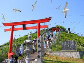 空から「運」が降ってくるウミネコ舞う八戸市 蕪島神社