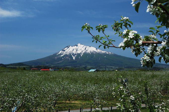 青森観光で買いたい!食べたい!「りんご」づくしの旅