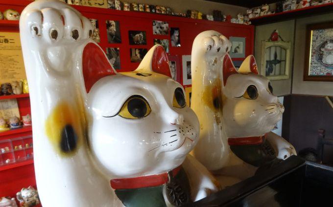 圧巻!!約3,000匹の招き猫が並ぶ「招き猫美術館」