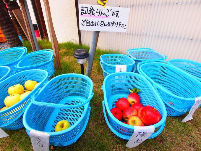 入園料350円で数種類のりんごが試食し放題!!