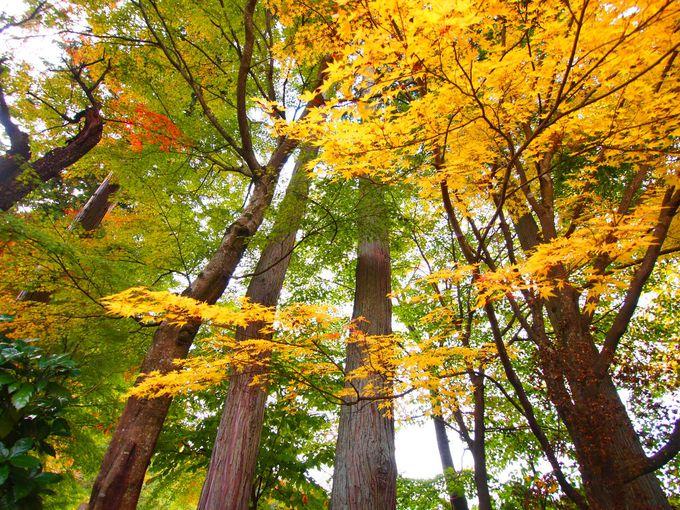 秋の1日をの〜んびり過ごせるりんご園