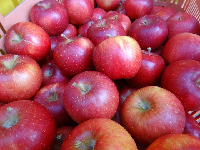 行かなきゃ食べられないシャッキっと極甘な完熟りんご