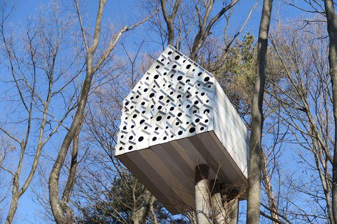自然と一体化するツリーハウス