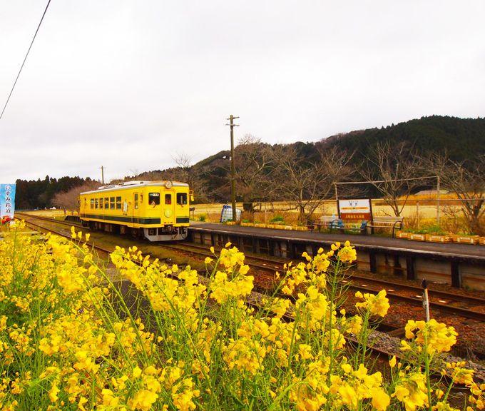 千葉「いすみ鉄道」に乗って、菜の花畑を走り抜けよう!