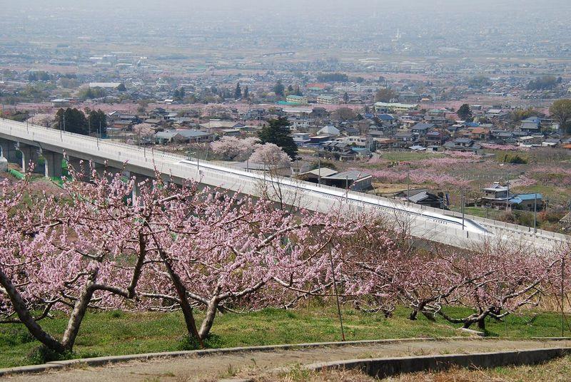 リニアと桃の競演!!春には桃源郷の中を走ります