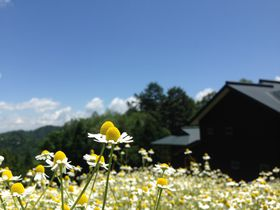 お花畑に泊まろう!安曇野「カミツレの宿 八寿恵荘」は10万本のカミツレの花が咲く