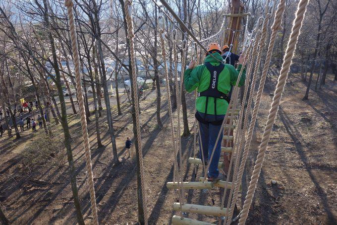 いざ、高さ10mの樹上へ!!動物や鳥と同じ目線で楽しむアスレチック