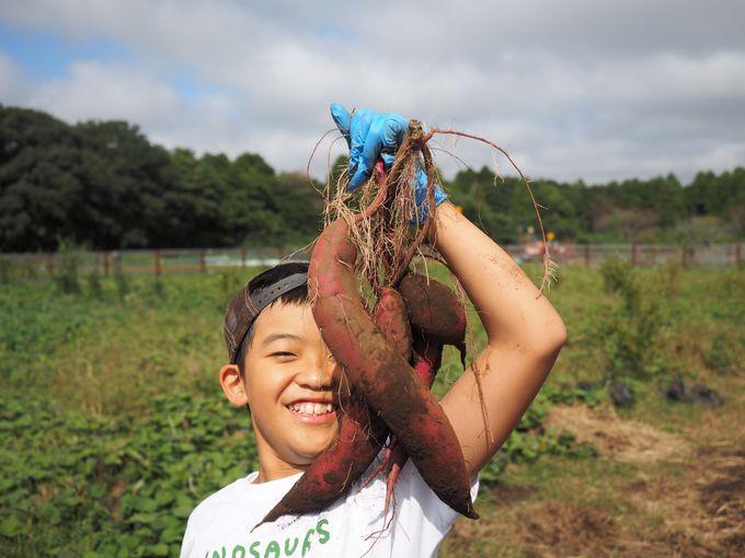 「とったどーっ」満面の笑みがこぼれちゃう収穫体験