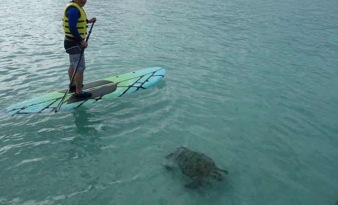ウミガメ遭遇率高し!!幸せを呼ぶハワイのアイドル