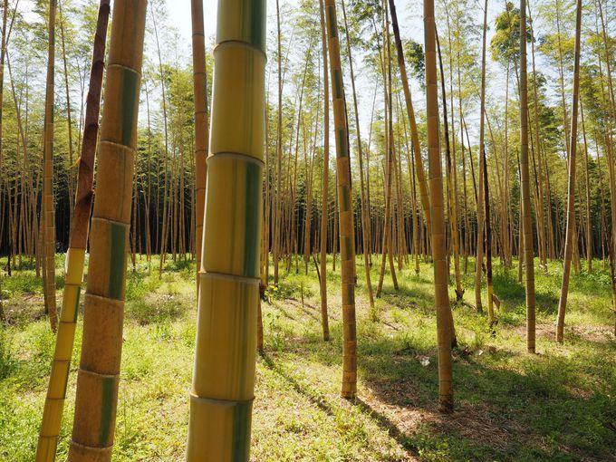 若山農場のココが凄い(1) 業界人注目の美しい竹林が広がる