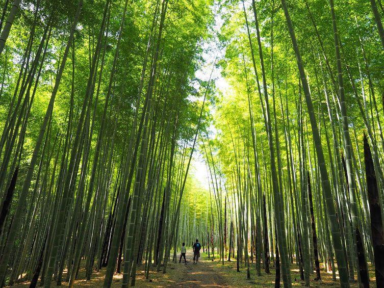 あの名作のロケ地にも!「若竹の杜 若山農場」