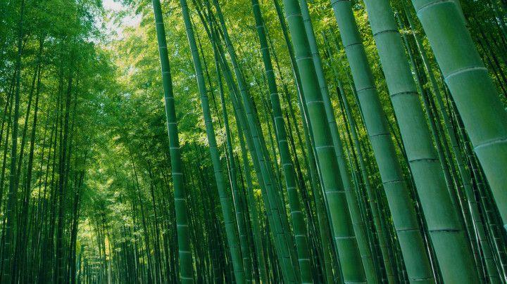竹と向き合い100年!!圧巻の竹林