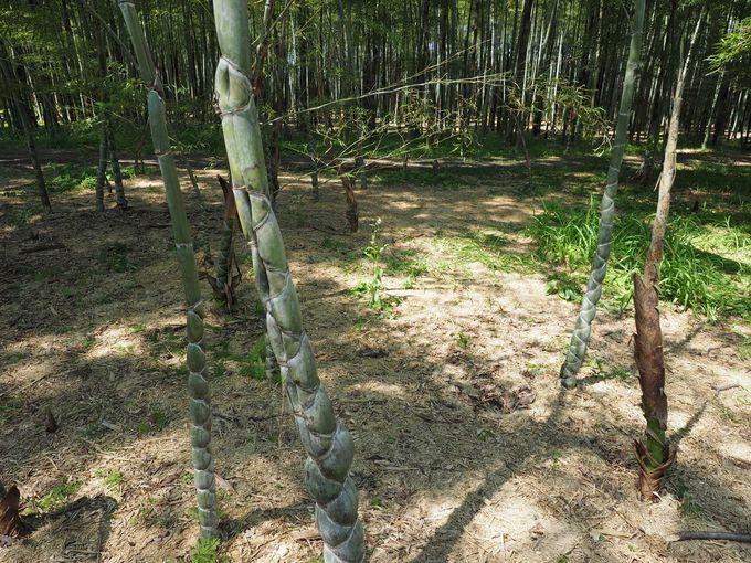 若山農場のココが凄い(3) まるで竹のギャラリー