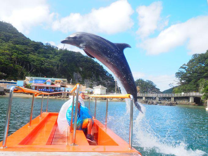 親子で体験!伊豆の碧い海でイルカと遊んでみた