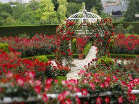 秘密の花園特別公開!!東京「ホテルニューオータニ」3万輪のバラ園